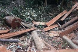 Gần 70 cây gỗ đường kính từ 20 – 60cm bị đốn hạ