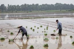 Hà Nội còn nhiều địa phương mới có 80% diện tích lấy được nước cho vụ Xuân