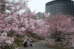 D2C X Inc. ra mắt trang thông tin du lịch Nhật Bản phiên bản tiếng Việt