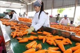Hải Dương xúc tiến tiêu thụ cà rốt