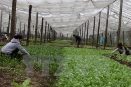 Bến Tre phát triển các hợp tác xã nông nghiệp gắn với chuỗi giá trị