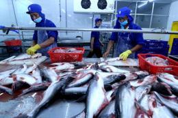 Mở thị trường xuất khẩu thủy sản - Bài 1: Lợi thế tăng trưởng từ hội nhập