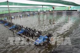 Bạc Liêu đầu tư 520 tỷ đồng xây khu nông nghiệp công nghệ cao ngành tôm