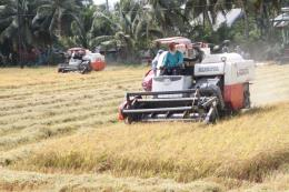 Giải quyết đầu ra cho lúa gạo vùng Đồng Tháp Mười (Bài 2)