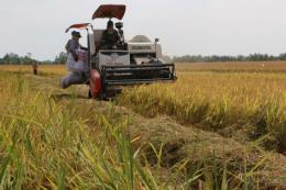 Giải quyết đầu ra cho lúa gạo vùng Đồng Tháp Mười (Bài cuối)