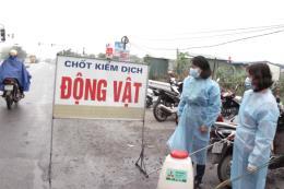 Hưng Yên lập 170 chốt kiểm dịch, kiểm soát dịch tả lợn châu Phi