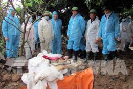 Quảng Ninh khẩn cấp ứng phó với dịch tả lợn châu Phi