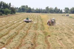 Giải quyết đầu ra cho lúa gạo vùng Đồng Tháp Mười (Bài 1)