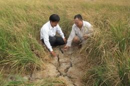 Tiền Giang sẽ mở 86 vòi nước công cộng cho dân vùng hạn mặn gay gắt