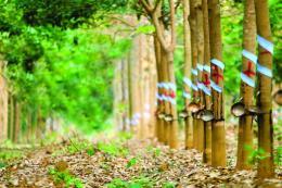Thaco đăng ký mua gần 70 triệu cổ phiếu HNG