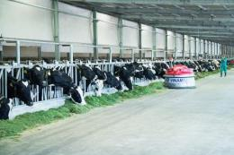 Công ty Bò sữa Việt Nam phát triển trang trại chăn nuôi theo hướng chuẩn mực quốc tế