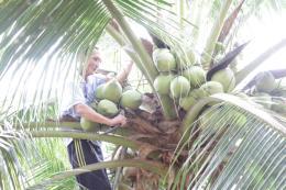 Nâng cao tiêu chuẩn chất lượng và truy xuất nguồn gốc nông sản