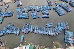 Bình Định quyết liệt chống khai thác hải sản bất hợp pháp