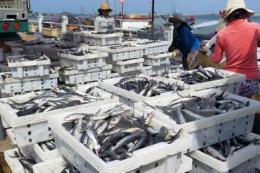 Nhiều giải pháp hoàn thành kế hoạch khai thác vụ cá Nam