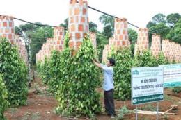 Liên kết sản xuất để xuất khẩu nông sản