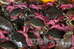 Giá cua biển tại Trà Vinh sụt giảm