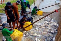 Hướng đi mới của người dân Phú Thọ trong nuôi thủy sản