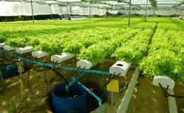 Tu nghiệp sinh nông nghiệp tại Israel - Bài 2: Học hỏi và khám phá