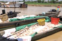 Bộ TN&MT yêu cầu xác định nguyên nhân cá lồng bè chết trắng trên sông La Ngà