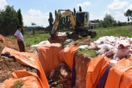 Nhiều hộ chăn nuôi lén lút vứt xác lợn chết ra môi trường