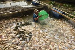 Công ty AB Mauri Việt Nam tạm ngừng hoạt động để khắc phục sự cố phát tán mùi hôi