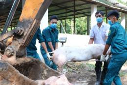 Vĩnh Long họp khẩn vì phát hiện 3 ổ dịch tả lợn châu Phi