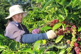 Xây dựng mã số vùng trồng cà phê