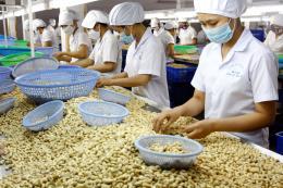 Bờ Biển Ngà muốn hợp tác với Bình Phước chế biến hạt điều