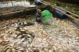 Phó Thủ tướng yêu cầu xác định nguyên nhân cá chết trên sông La Ngà
