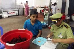 Quảng Ninh xử phạt 2 cửa hàng vi phạm kinh doanh tôm càng đỏ