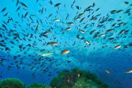 Thái Lan cấm đánh bắt hải sản tại Vịnh Thái Lan