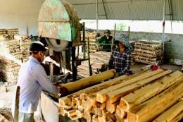 Đảm bảo minh bạch xuất xứ các mặt hàng gỗ