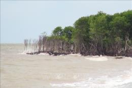 Điều chỉnh Đề án bảo vệ và phát triển rừng ven biển ứng phó với biến đổi khí hậu