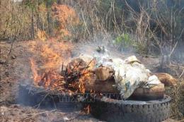 Hướng dẫn tiêu huỷ lợn bị tả châu Phi bằng phương pháp đốt