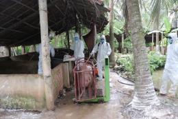 Cơ cấu lại ngành chăn nuôi để giảm thiểu thiệt hại do dịch bệnh