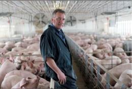 Mỹ: Ngành chăn nuôi lợn nỗ lực ứng phó ảnh hưởng của căng thẳng thương mại