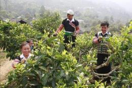 Yên Bái phát triển các sản phẩm đặc sản vùng, miền