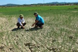 Nguy cơ sẽ có 65.500 ha lúa bị hạn hán, thiếu nước