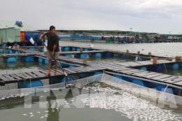 Có 90% mẫu cá chết trên sông Trà Và bị nhiễm ký sinh trùng