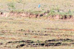 Hơn 1.500 ha đất nông nghiệp phải ngưng sản xuất vì thiếu nước