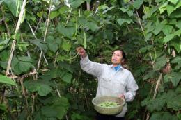 Lào Cai: Sản phẩm vụ Đông giúp nông dân tăng thu nhập
