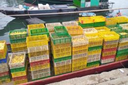 Quảng Ninh bắt vụ nhập lậu bằng đường biển 35 ngàn con vịt giống