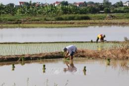 Nông dân bỏ ruộng không gieo cấy, lãng phí đất sản xuất