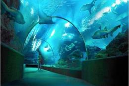 Sắp khai trương công viên thủy cung cao nhất thế giới tại Trung Quốc