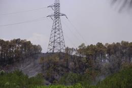 Cháy rừng thông tại Thừa Thiên - Huế