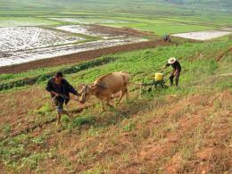 Triều Tiên sẽ đối mặt với tình trạng thiếu hụt lương thực nghiêm trọng