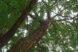 Bình Phước: Bắt nhóm đối tượng trộm 52 cây gỗ quý