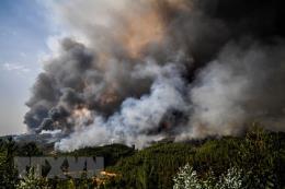 Cháy hàng nghìn hécta rừng tại Algeria