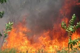 Cháy 20 ha rừng tái sinh ở vùng Bàu Co, Thừa Thiên-Huế