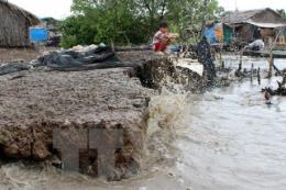 Cà Mau: Ban bố tình huống khẩn cấp bảo vệ đê biển Tây